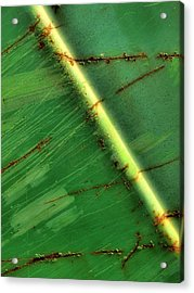 Shades Of Green Acrylic Print by Tom Druin