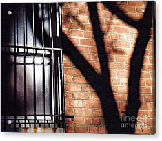 Shadow On The Wall Acrylic Print by Sarah Loft