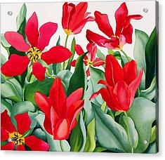 Shakespeare Tulips Acrylic Print by Christopher Ryland
