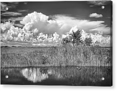 shark river slough BW Acrylic Print by Rudy Umans