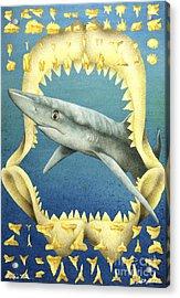 Sharks Truth... Acrylic Print by Will Bullas