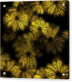 Shattered Daisy 2 Acrylic Print by Patricia Keith