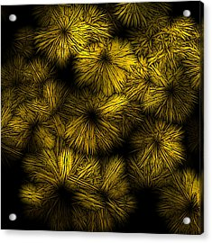 Shattered Daisy 5 Acrylic Print by Patricia Keith
