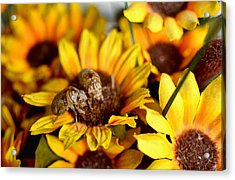 Shell Of A Bug On Flower Acrylic Print by Jeffrey Platt