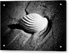 Shell On Sand Black And White Photo Acrylic Print by Raimond Klavins