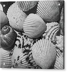 Shells In Black And White Acrylic Print by Mary Bedy