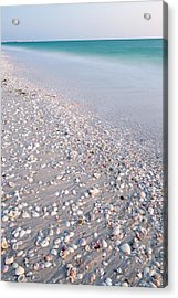 Shells In The Sand Acrylic Print by Adam Pender