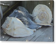 Shells Of Portsmouth Island Acrylic Print by Cathy Lindsey