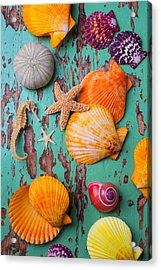Shells On Old Green Board Acrylic Print by Garry Gay