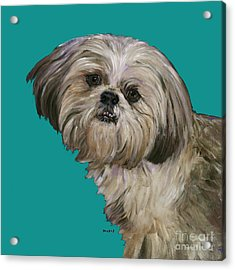 Shih Tzu On Turquoise Acrylic Print by Dale Moses