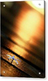 Shine On Me Acrylic Print by Suradej Chuephanich