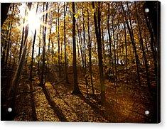 Shining Sun In The Woods Acrylic Print by Kamil Swiatek