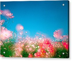 Shiny Pink Flowers In Bloom With Blue Acrylic Print by Panoramic Images