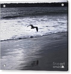 Shore Bird -02 Acrylic Print by Gregory Dyer