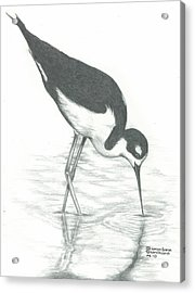 Shore Bird Acrylic Print by Sharon Blanchard