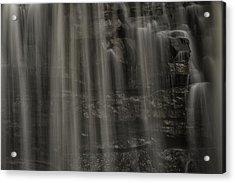 Shower Curtain Drapes Bear Roar Acrylic Print by Mark Serfass