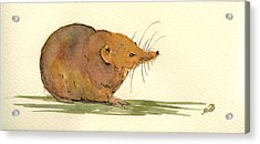 Shrew Acrylic Print by Juan  Bosco