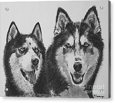 Siberian Husky Dogs Sketched In Charcoal Acrylic Print by Kate Sumners