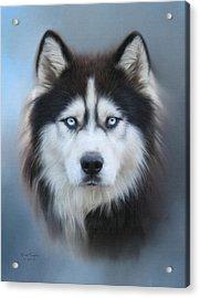 Siberian Husky Acrylic Print by Lena Auxier