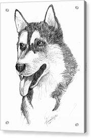 Siberian Husky Acrylic Print by Tricia Griffith