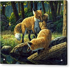 Red Foxes - Sibling Rivalry Acrylic Print by Crista Forest
