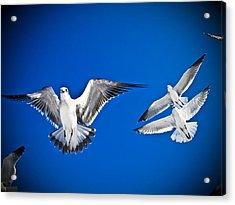 Siesta Key Sea Gulls Acrylic Print by Andrea Floyd