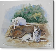 Siesta Time Acrylic Print by Suzanne Schaefer
