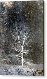 Silent Night Acrylic Print by Carol Leigh