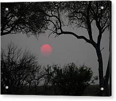 Silhouette Of Leadwood Trees At Dusk Acrylic Print by Panoramic Images