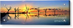 Silhouetted Sential Sunset Acrylic Print by Bill  Robinson