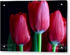 Silky Smooth Tulips Acrylic Print by Tracy  Hall
