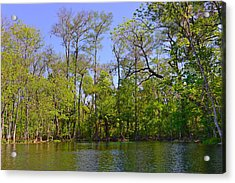 Silver River Florida Acrylic Print by Christine Till