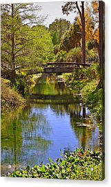 Silver Springs Florida Acrylic Print by Christine Till
