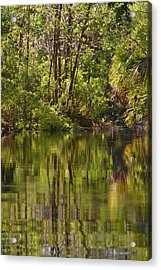 Silver Springs Nature Park Florida Acrylic Print by Christine Till