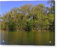 Silver Springs - Old-style Florida Acrylic Print by Christine Till