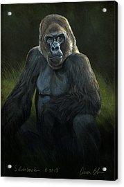 Silverback Acrylic Print by Aaron Blaise