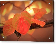 Silverberry Leaf Acrylic Print by Andrea Kappler