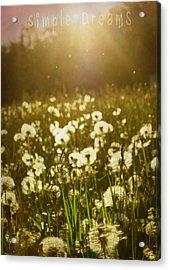 Simple Dreams Acrylic Print by JC Photography and Art