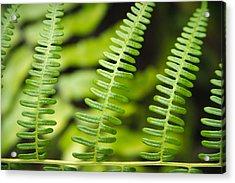 Simple Green Acrylic Print by Adam Romanowicz