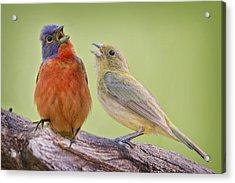 Singing Buntings Acrylic Print by Bonnie Barry