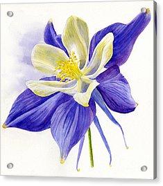 Single Blue Columbine Acrylic Print by Sharon Freeman