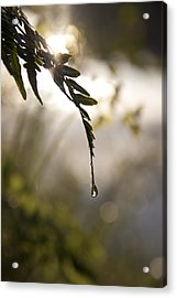Single Drop Acrylic Print by Lindsey Weimer