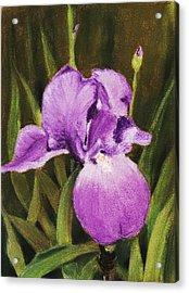 Single Iris Acrylic Print by Anastasiya Malakhova