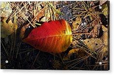 Single Leaf Acrylic Print by Michael Saunders