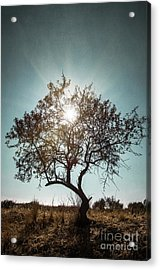Single Tree Acrylic Print by Carlos Caetano