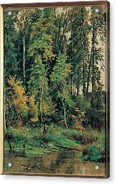 Siskin Ivan Ivanovic, Towards Acrylic Print by Everett