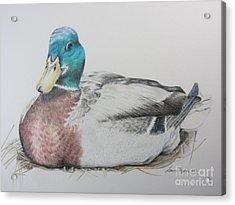 Sitting Duck Acrylic Print by Laurianna Taylor