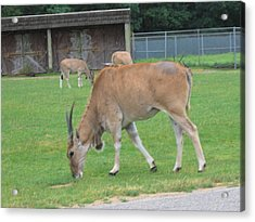 Six Flags Great Adventure - Animal Park - 121235 Acrylic Print by DC Photographer