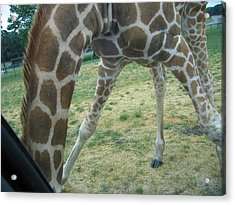Six Flags Great Adventure - Animal Park - 121245 Acrylic Print by DC Photographer