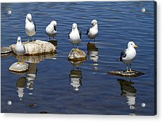 And Then There Were Six Acrylic Print by Donna Kennedy